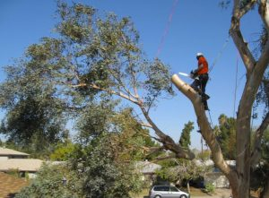 24-7 tree removals